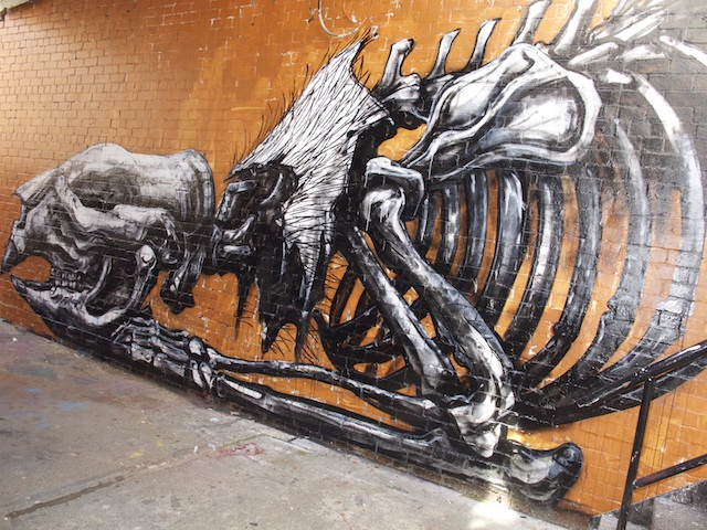 Wombat skeleton on the wall outside Backwoods