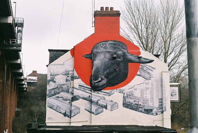 The Sheep Above Byker Wall