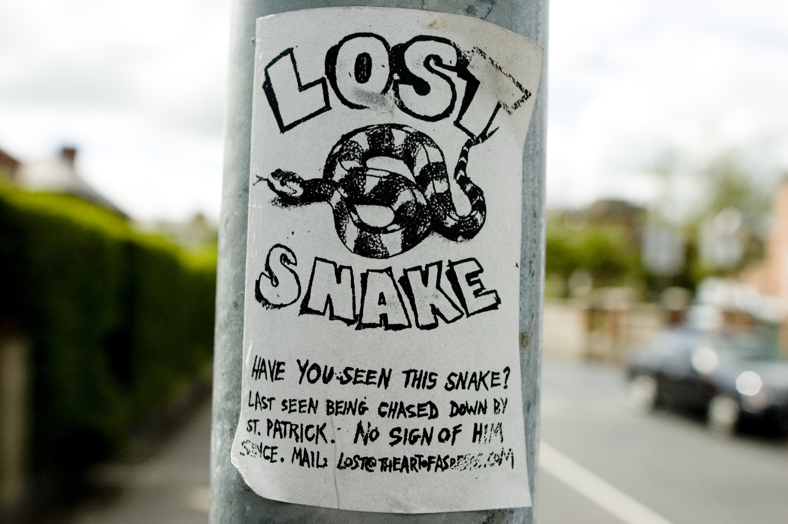 Lost Snake by Asbestos. Photo from Asbestos