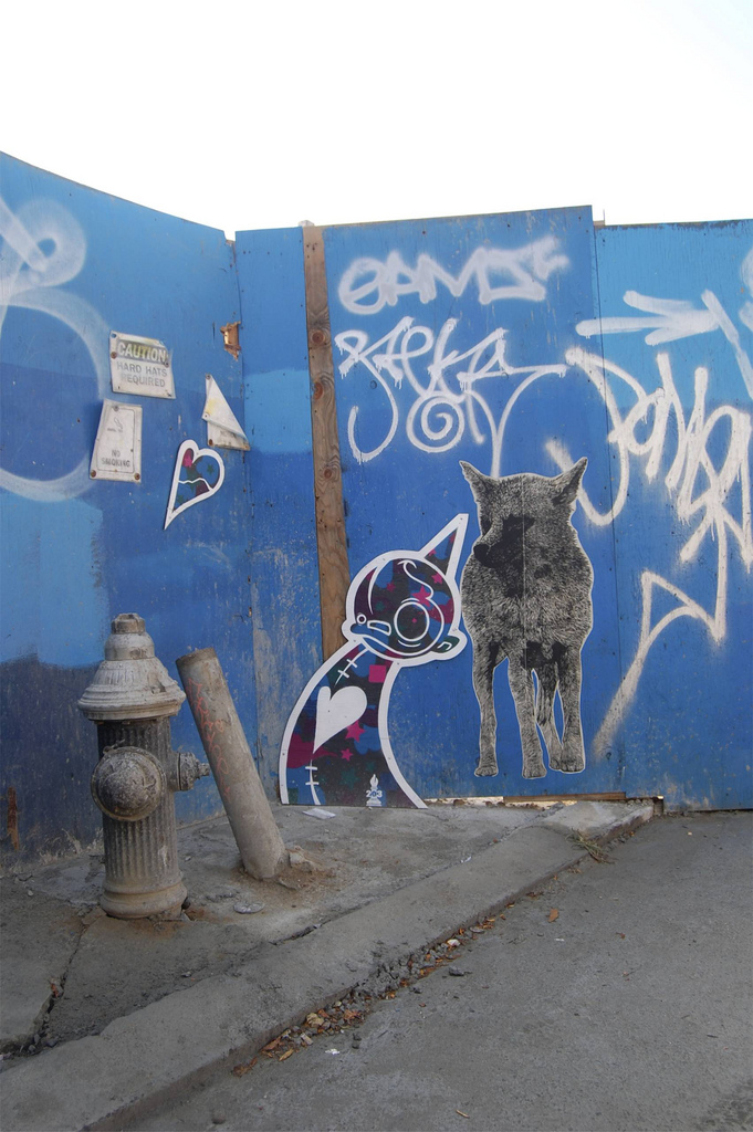Yote Coyote