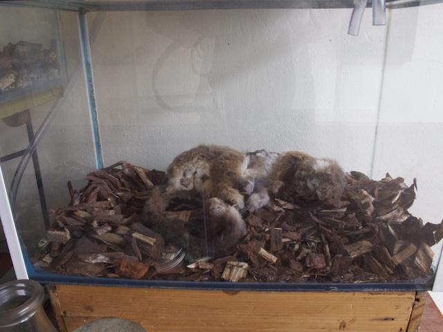 Decaying Possum