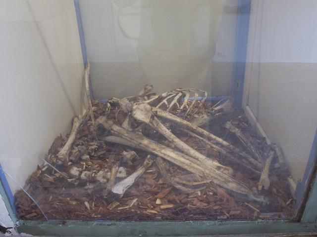 Pelican Bones