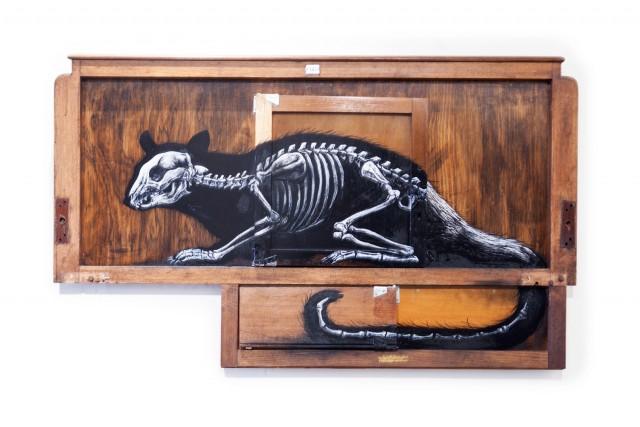 """Petaurus Breviceps"" SUGAR GLIDER (open doors)"
