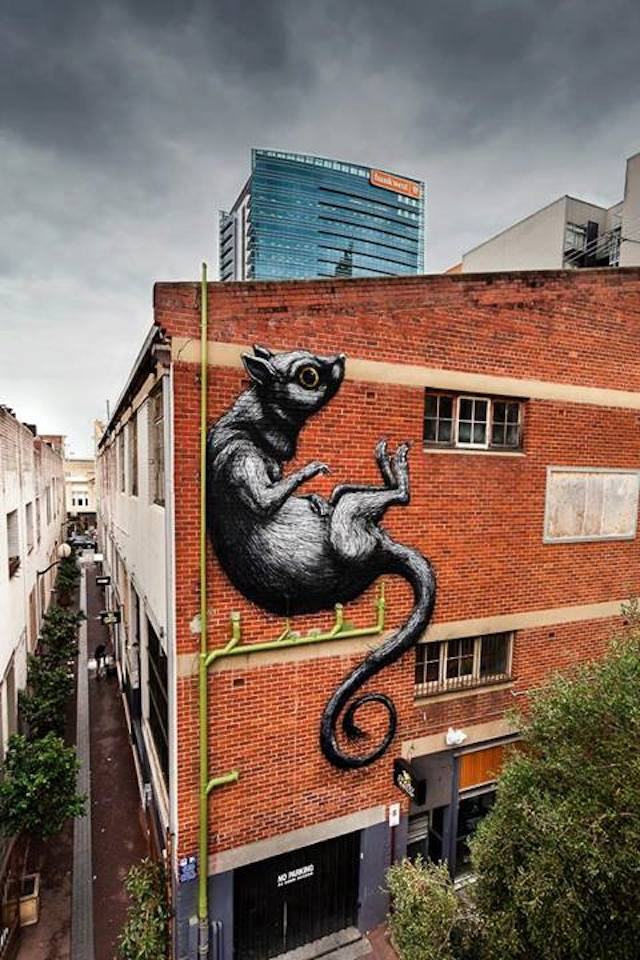 ROA - Photo by Bewley Shaylor